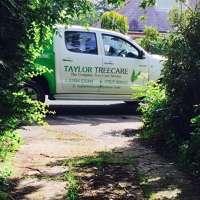 Taylor Treecare