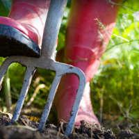 Chelmsford Gardening