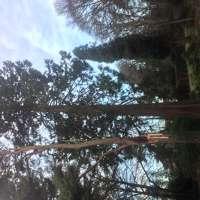 Kelly Arboriculture