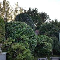 Brett Robinson Horticulturist & Gardening Services