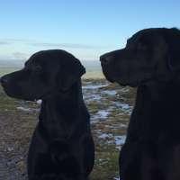Marion Yates - Dog Behaviour Consultant