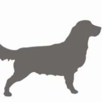 Milo's dog walking and pet sitting service