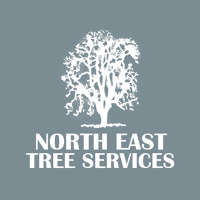 Northeast Tree Services