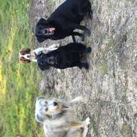 Forest Dog Walking and pet services