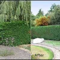 Evergreentree&landscaping services