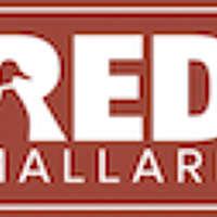 Red Mallard