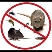 GD Pest & Wildlife Control