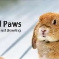 Small Paws Pet Sitting and Boarding logo