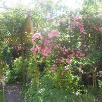 Radius Garden services