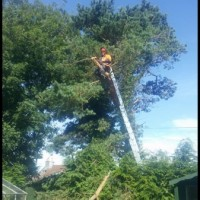Stewarts tree&lanscaping services