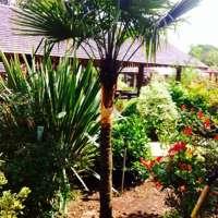 Danum Plants