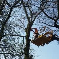 Beaver Tree Surgeons