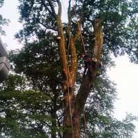 Devon Tree Services Ltd