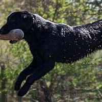 Wirral Gundogs