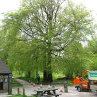 Paul Johnson Tree Services Ltd