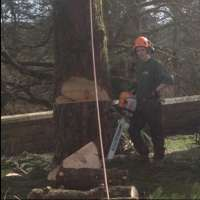 Ollie Kennard Tree Surgery