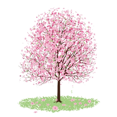 Cherry Blossom Interiors