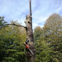 Dartforest Tree Works Ltd