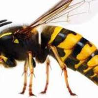24/7 wasp nest removal lincolnshire