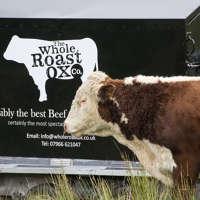 Whole Roast Ox Company