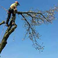 durham valley tree services