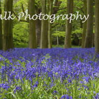 Woodland Walk Photography logo