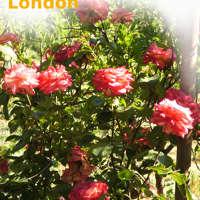 Gardening Service London logo