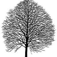Linden Herbal Medicine Clinic logo