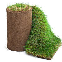 Wirral Turf Ltd