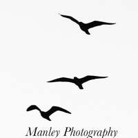 Manley Photography logo