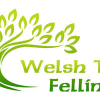 Welsh Tree Felling