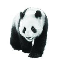 Panda Press Stone Ltd