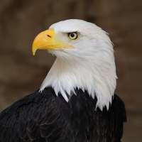 Eagle Bookkeeping Ltd logo