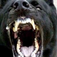 Relic's Dog Training logo