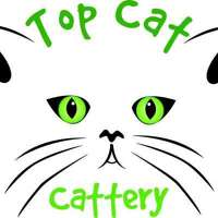 Top cat cattery  logo