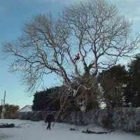 Crowcroft bros tree surgeons