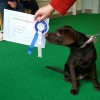 Puppy School at Greenworld Pets