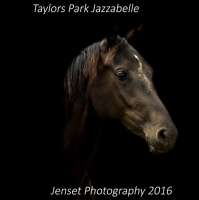 Jenset Photography