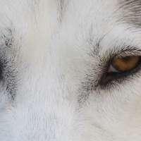 Akira Dog Training logo