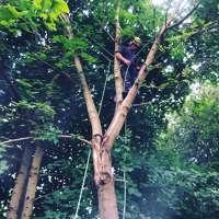 Silver Oak Tree Surgery