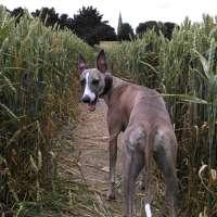 Winnie's Dog Walks
