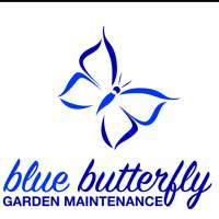 blue butterfly garden maintenance and design