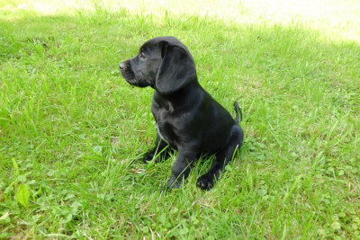 Photo by Acer Dog Training