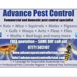 Photo by Advance Pest Control Bristol