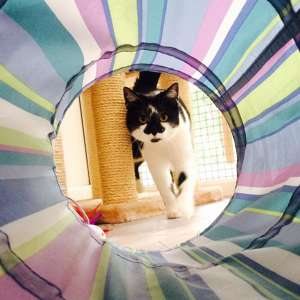 Photo by Anastasia's Cat Hotel