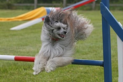 Photo by BlackCat Dog Training