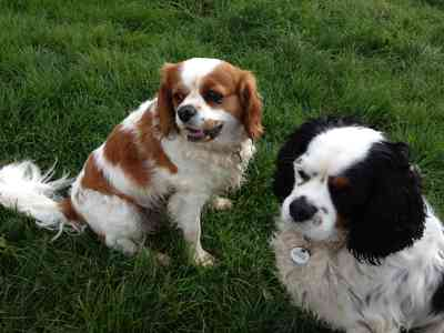 Photo by Debbies Dog Care /Pet Services