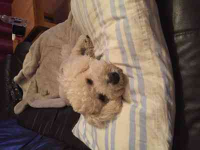 Photo by Debbies Dog Care/Pet Servicew