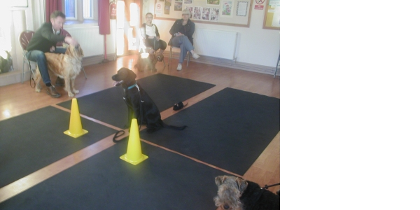 Photo by FOUR PAWS DOG TRAINING.