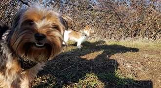 Helping Hound | Bark Profile